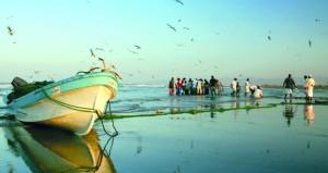 294 ألف طن إجمالي الأسماك المنزلة بالصيد الحرفي في السلطنة
