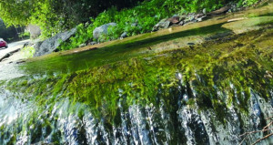 فلج الطاغي .. لوحة فنية يشكلها الماء والخضرة