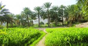 قرية الرحبة بنـزوى .. طبيعة جبلية ومناظر خلابة ـ وادي القرية تتنوع فيه الأشجار الوارفة والنباتات العطرية