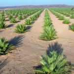"""""""تنمية نخيل عمان"""" تطرح مناقصات إنشاء المجمع الصناعي بنزوى"""
