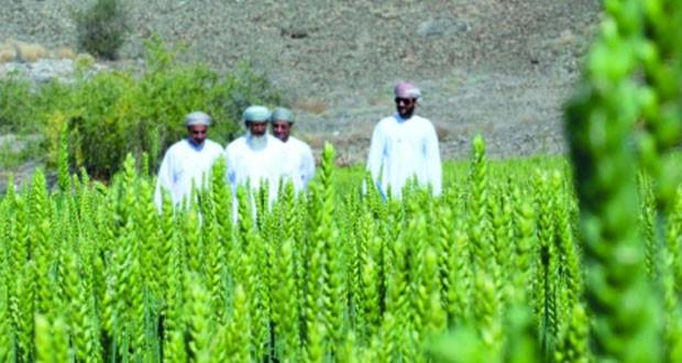 صندوق التنمية الزراعية والسمكية يمول عدداً من مشاريع زراعة القمح
