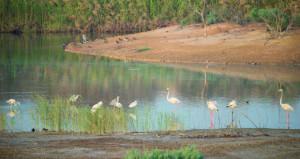 """اتفاقية رامسار تعلن """" بحيرات الأنصب """" كثاني موقع بالسلطنة"""