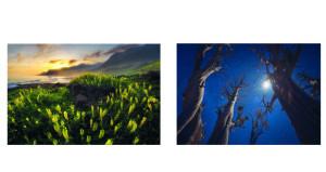"""""""شؤون الفنون"""" تُشارك في بينالي الفياب لتصوير الطبيعة وتفتح باب المشاركة في بينالي الأبيض والأسود"""