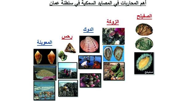 تصنيف 252 نوعا من المحاريات في بحار السلطنة