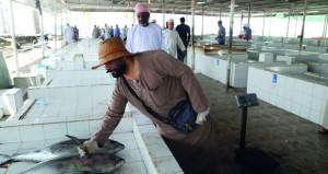 قرابة 60 ألف طن إجمالي الأسماك المنزلة بالصيد الحرفي بنهاية يناير بقيمة تجاوزت 29 مليون ريال عماني