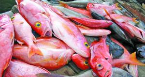 أسواق السلطنة تسجل وفرة في الأسماك وجهود لتغطية الطلب المتزايد