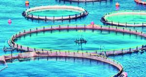 133% ارتفاعا في انتاج الاستزراع السمكي بالسلطنة العام الماضي