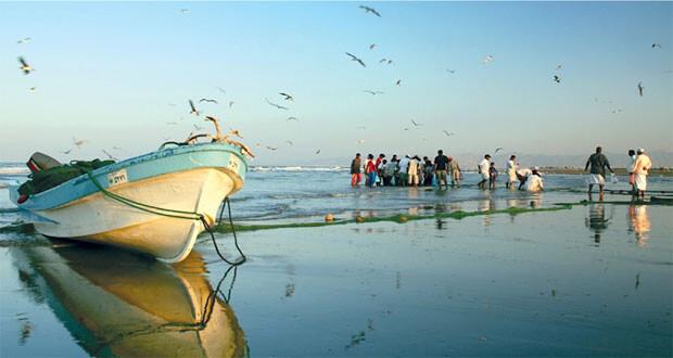 الصيد الحرفـي يستحوذ على 8ر95% من الأسماك المنزلة