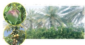 محاصيل زراعية متنوعة تجود بها مزارع بلدة دوت
