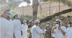 تمت عن بعد والالتزام بدواعي الوقاية الصحية بين الحضور  إقبال كبير على عمليات طناء النخيل بعبري