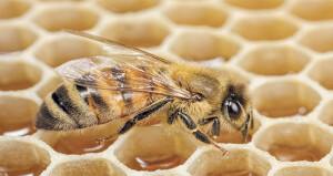 40 % تراجعا فـي أعداد الحشرات بالعالم