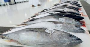 في ظل جائحة كورونا.. «الفاو» تشيد بجهود السلطنة في إدارة التسويق السمكي
