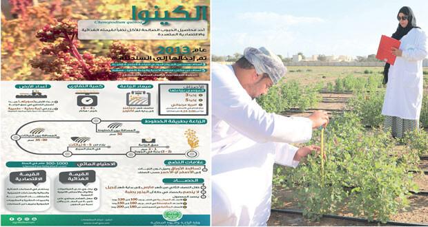 تجري عليه تجارب لزراعته منذ عام 2013 .. السلطنة تحتفل باليوم العالمي لنبات «الكينوا»