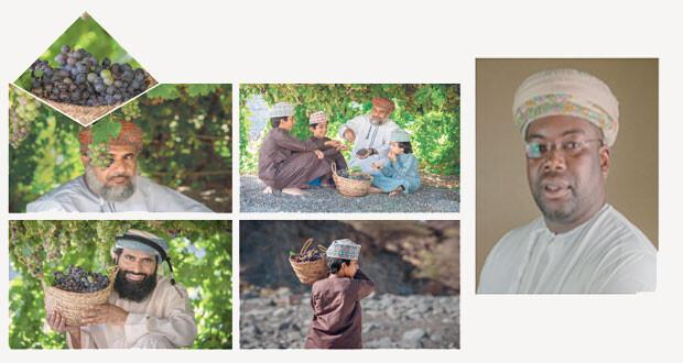 موسى الحجري يوثق بـ«الصور» موسم العنب فـي سمائل