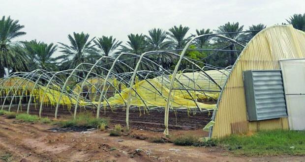 الأمطار والرياح الشديدة تسبب أضرارا بمزارع في عبري