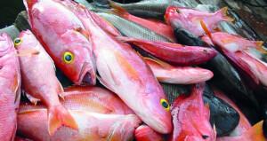 أكثر من 317 ألف طن إجمالي الأسماك المنزلة بالصيد الحرفي بنهاية مايو