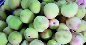 جني ثمار الخوخ بالجبل الأخضر
