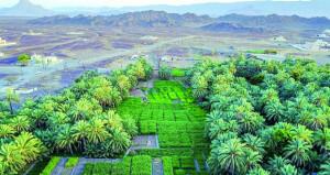 262.8 ألف فدان إجمالي المساحات المزروعة بالسلطنة بنهاية العام الماضي
