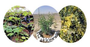 مبادرة بعبري لزراعة وتوزيع 3000 شجرة متنوعة