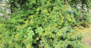 نباتات تفوح برائحتها العطرية الزكية وترسم لوحة مختلفة الألوان