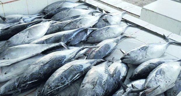 وكيل الثروة الزراعية : 2ر13% معدل نمو الناتج الإجمالي لقطاعي الزراعة والأسماك في السلطنة