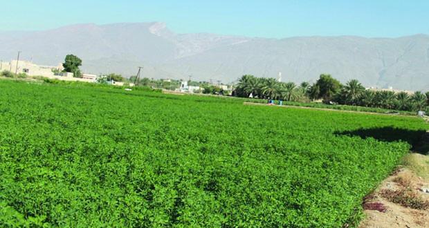 موسم زراعي شتوي مبشر في قرى نـزوى