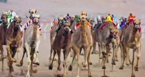 الاتحاد العماني لسباقات الهجن يعلن أماكن ومواعيد السباقات في مختلف محافظات السلطنة