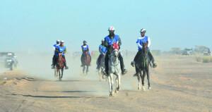 الحصان سهيل دي فناون يتوج بلقب سباق القدرة لمسافة 100كم للعموم