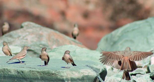 الطبيعة العمانية .. وجهة سياحية وبيئة جاذبة للطيور