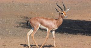 السلطنة تشارك دول العالم الاحتفال باليوم العالمي للحياة البرية