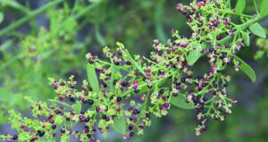نباتات نادرة وتنوع بيئي في جبال وأودية نخل