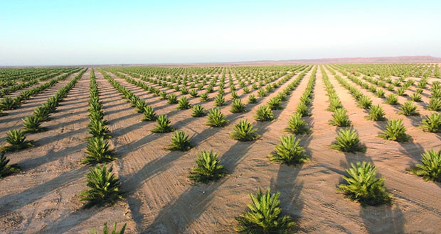 جهاز الاستثمار العماني يعلن توليه إدارة مشروع زراعة المليون نخلة