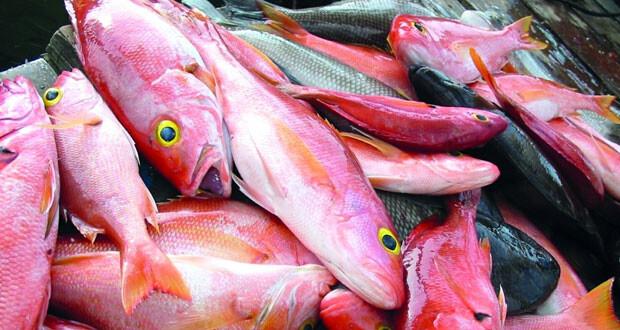 انخفاض أسعار الأسماك فـي أسواق السلطنة الشهر المنصرم