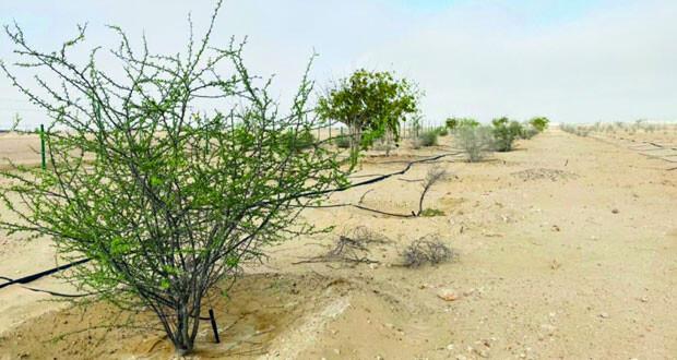 مشروع وطني بهيماء لمكافحة التصحر وزيادة الغطاء النباتي