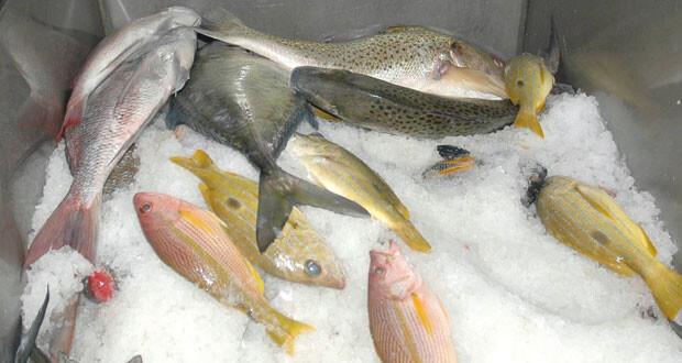 صندوق التنمية الزراعية والسمكية يمول وينفذ 246 مشروعا بتكلفة تزيد عن 42 مليون ريال عماني
