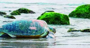 تطوير محمية السلاحف برأس الجنز بجنوب الشرقية
