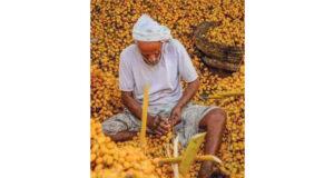 المصور أحمد السعيدي يتوج بالمركز الثاني فـي «مواسم الحصاد» الفوتوغرافية بالسعودية