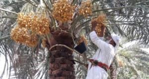«الفاو» تؤكد على التزام السلطنة بتحويل أنظمتها الغذائية والزراعية لنظم مستدامة