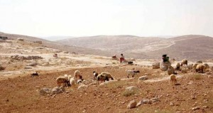 """تحذير """" أممي"""" من مضي الاحتلال قدما في ترحيل بدو فلسطين"""