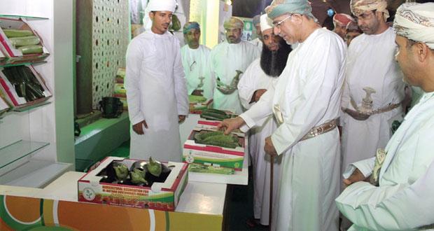 الساجواني: توزيع 238 ألف شتلة وفسيلة للأفراد والمزارعين