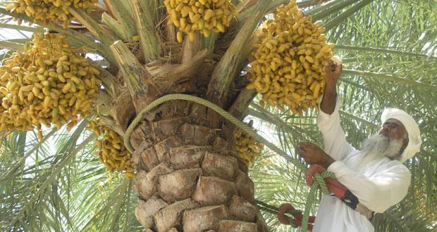 السلطنة تشارك الدول العربية الاحتفال بيوم الزراعة العربي
