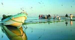 199.6 مليون ريال عماني قيمة الأسماك المنزلة بالصيد الحرفي العام الماضي بارتفاع نسبته 17.8%