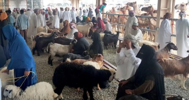سوق سناو يشهد حركة تجارية نشطة استعدادا لعيد الأضحى