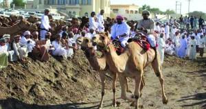 برعاية تيمور بن أسعد .. عروض مبهرة بمهرجان ركضة عرضة الهجن بوادي الشعيبة بالمصنعة